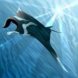 Manta ray. Floating against sea background royalty free illustration