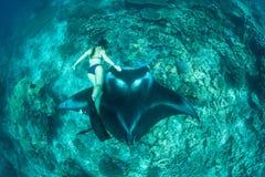 Manta Ray and Free Diver in Raja Ampat royalty free stock images