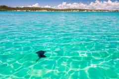 Manta ray. In the lagoon of the Emerald Sea of Antsiranana bay & x28;Diego Suarez& x29;, north of Madagascar Stock Images