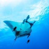 Manta ray Royalty Free Stock Photo