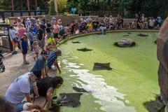 Manta Ray Pool no san Diego Seaworld em Califórnia do sul EUA Imagem de Stock