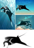 Manta ray set. Set of manta ray including four images - isolated manta ray in black and white and three mantas against different colour sea background royalty free illustration