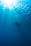 Manta Ray with Sun Rays near Sea Surface. Swimming Big Manta Ray with Sun Rays near Sea Surface, Balinese diving, Indonesia stock photos