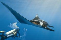 Manta und Taucher auf dem Riff lizenzfreies stockfoto