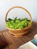 Manta vegetal Imágenes de archivo libres de regalías