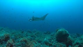 Mantarochen auf einem Korallenriff Stockfotografie