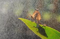 Mante et jour pluvieux Photographie stock