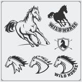 Manteau de cheval des bras héraldique Labels, emblèmes et éléments de conception pour le club de sport Photographie stock libre de droits