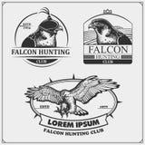 Manteau de faucon des bras héraldique Labels, emblèmes et éléments de conception pour le club de sport Conception d'impression po illustration de vecteur