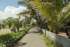 Manteau de paume de plage de Kuta, lieu de villégiature luxueux avec la piscine et lits pliants Bali, Indonésie Photos libres de droits