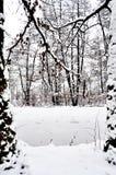 Manteau neigeux 免版税图库摄影
