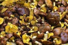 Manteiga dos cogumelos Fotografia de Stock Royalty Free