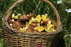 Manteiga dos cogumelos Imagens de Stock Royalty Free