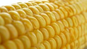 Manteiga ou óleo quente de derramamento sobre o milho fresco amarelo maduro em espigas filme