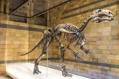 Mantellisaurus 免版税库存照片
