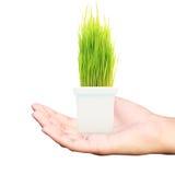 Mantendo a planta verde disponivel imagens de stock