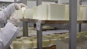 Mantener los rollos del queso hecho en casa conservación en cámara frigorífica almacen de metraje de vídeo