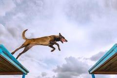 Mantenga el entrenamiento del perro imágenes de archivo libres de regalías