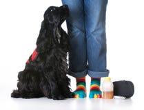 Mantenga el perro fotografía de archivo libre de regalías