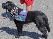 Mantenga el perro Foto de archivo libre de regalías