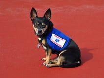 Mantenga el perro, fondo rojo imagen de archivo libre de regalías