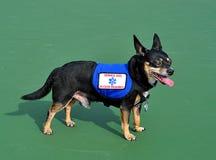 Mantenga el perro, fondo verde Imagen de archivo