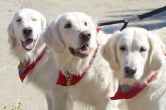 Mantenga los perros Fotos de archivo