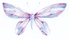 Mantequilla púrpura y azul de la fantasía Foto de archivo libre de regalías