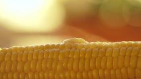 Mantequilla que derrite en maíz recientemente hervido caliente metrajes