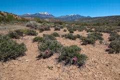 Manti-La Sal National Forest Royalty Free Stock Image