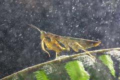 Mantis βροχής στοκ φωτογραφίες με δικαίωμα ελεύθερης χρήσης