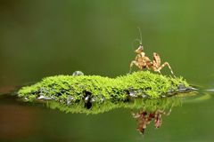 Mantis επίκλησης στο νησί στοκ φωτογραφία