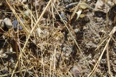 Mantis στους κίτρινους ξηρούς κλάδους στοκ φωτογραφίες
