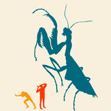 Mantis χρώματος Στοκ εικόνες με δικαίωμα ελεύθερης χρήσης