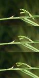 Mantis и саранча Стоковая Фотография RF