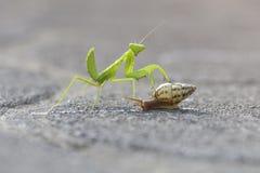 Mantis и улитка стоковая фотография rf
