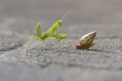 Mantis и улитка стоковые фото