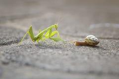Mantis и улитка стоковое изображение rf