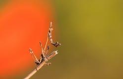 Mantis на конце-вверх ветви стоковое фото rf