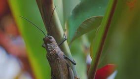 Mantis остается на стержне завода видеоматериал