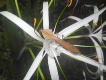 Mantis плеча змея Стоковые Фотографии RF