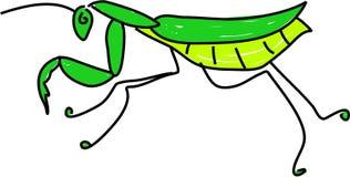 Mantis illustration stock
