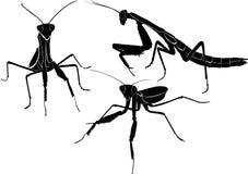 Mantis animal isolated. On white background royalty free illustration