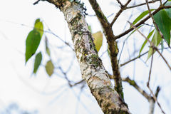Mantis camouflaged on tree branches. stock images