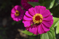 Mantis close up on pink flower Stock Photo