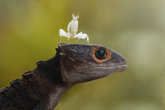 Mantis and Croc Skink. Funny concept Royalty Free Stock Photos