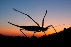 Mantis doing exercise, insect yoga Stock Photos