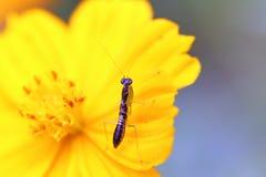 Mantis on flower Stock Photography