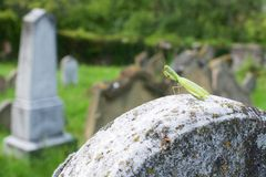 Mantis on gravestone Royalty Free Stock Images