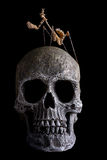Mantis on human skull Stock Images